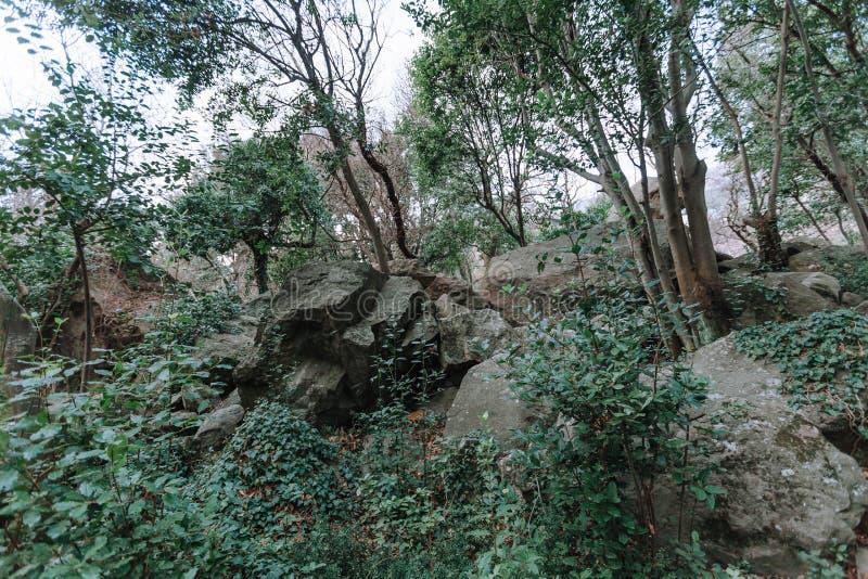 Alberi verdi della foresta della molla in un paesaggio pittoresco fotografie stock libere da diritti