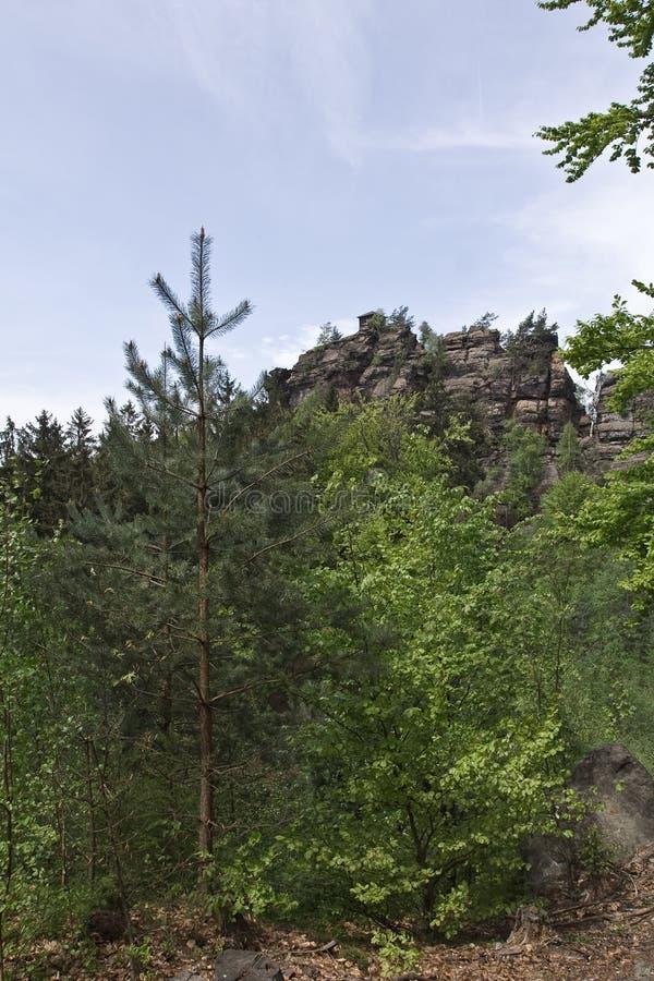 Alberi verdi in montagna anteriore della roccia immagine stock libera da diritti