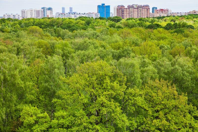 Alberi verdi nella foresta di estate ed in case urbane immagini stock
