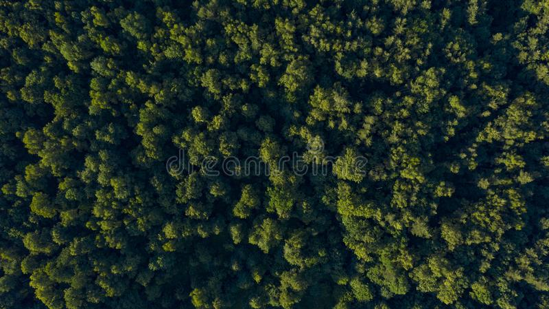Alberi verdi sul tramonto, vista sopraelevata fotografia stock