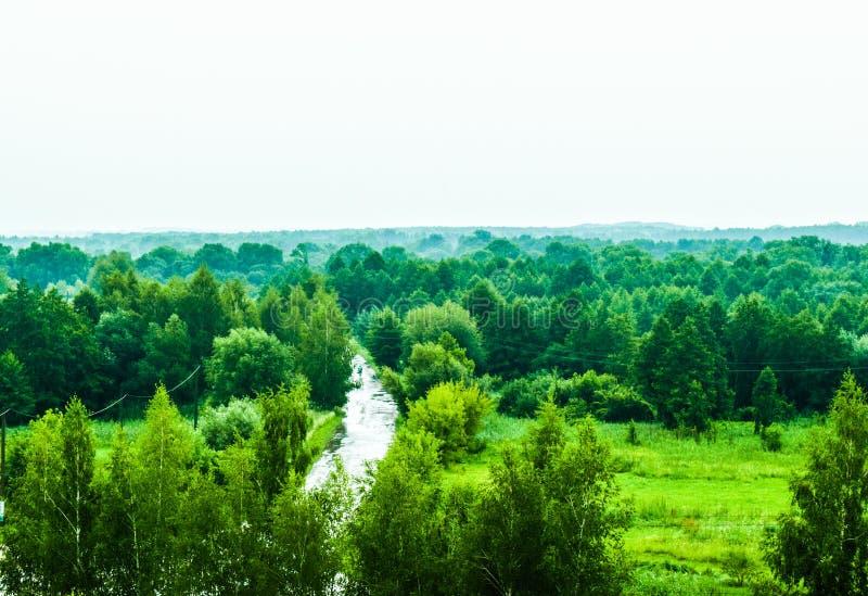 Alberi verdi verdi immagine stock