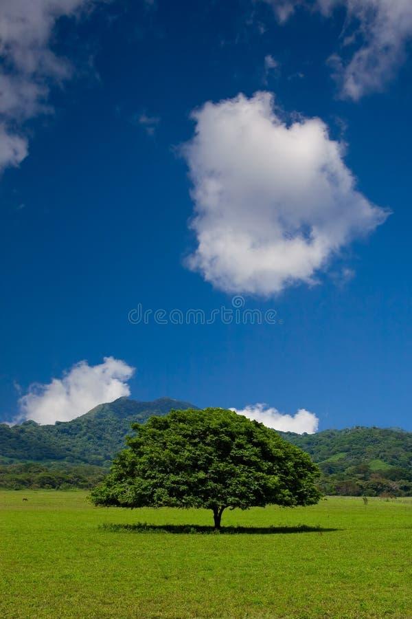 Albero fotografie stock