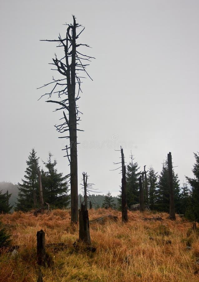 Albero abbandonato nel paesaggio triste fotografie stock libere da diritti