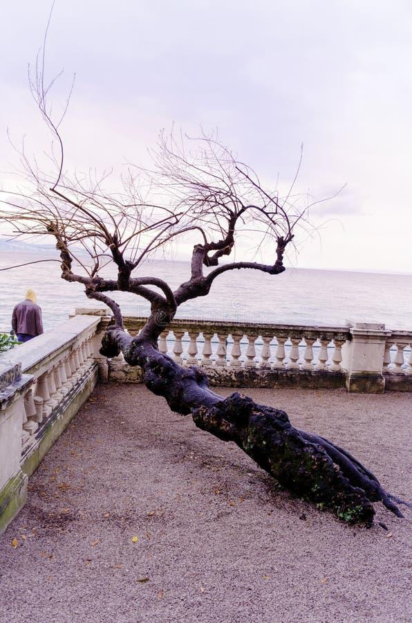 albero al tramonto del mare immagini stock