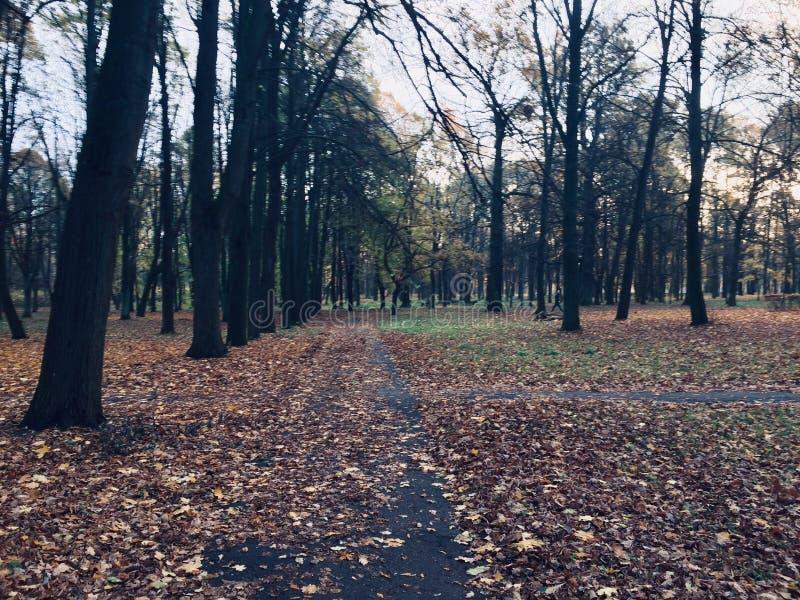 Albero all'autunno Percorso immagine stock