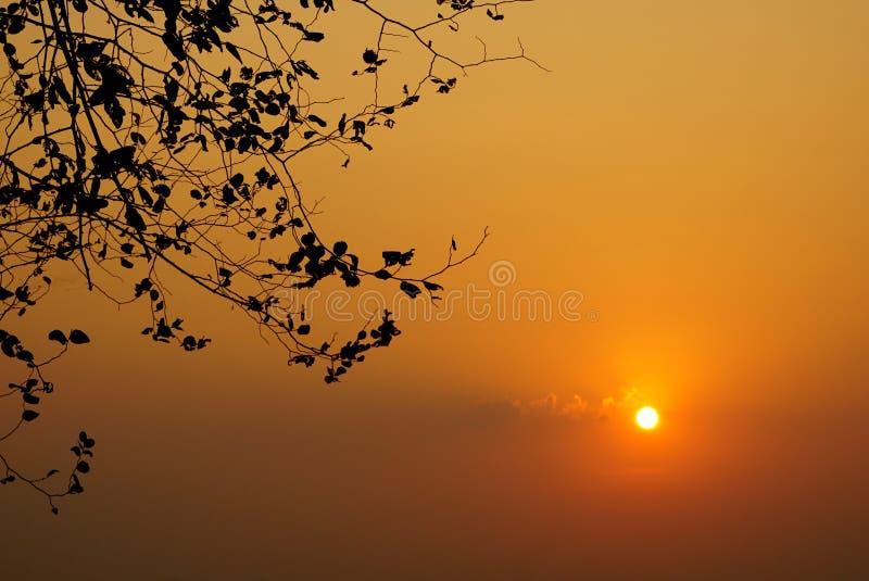 Albero asciutto al tramonto sopra il fondo arancio del cielo immagine stock libera da diritti