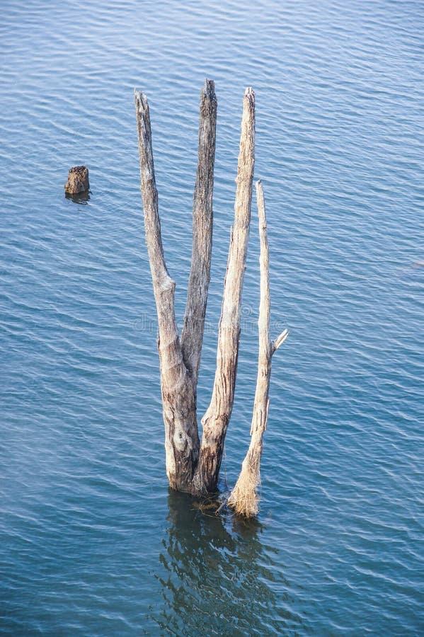 Albero asciutto e vecchio legno in lago blu profondo immagini stock