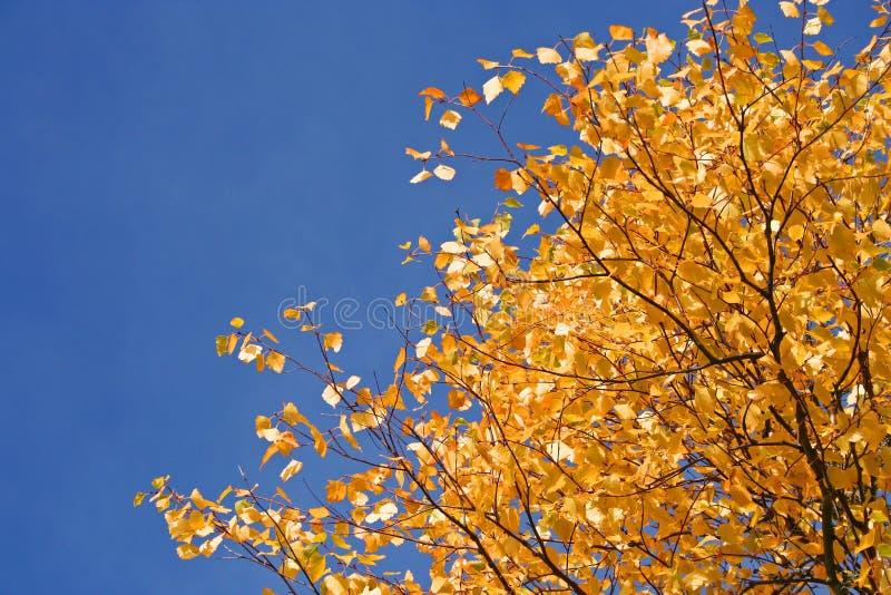 Albero in autunno di caduta immagine stock libera da diritti