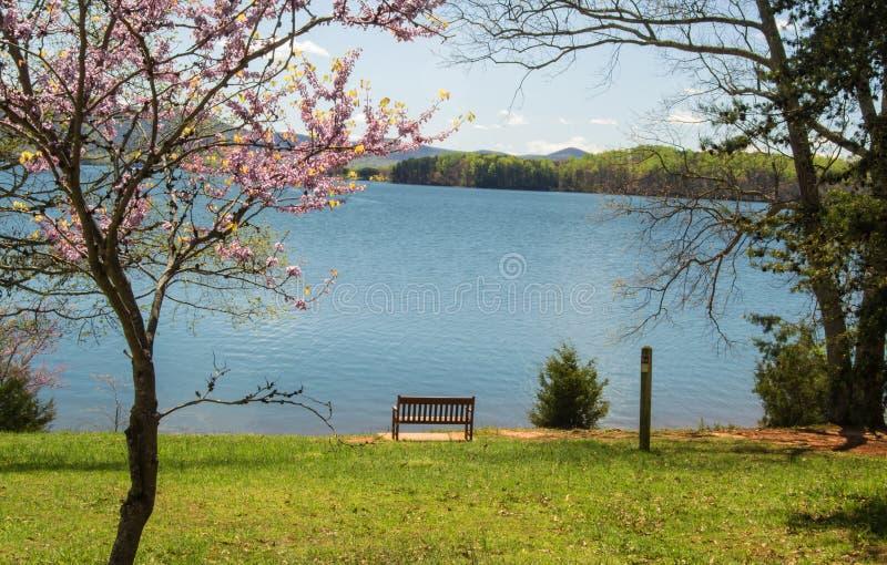 Albero, banco e lago di Redbud immagine stock