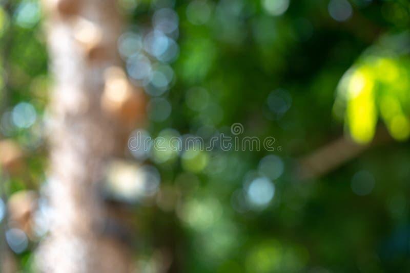 Albero beautyful fresco di verde della natura confuso e fondo del bokeh nella giungla fotografie stock