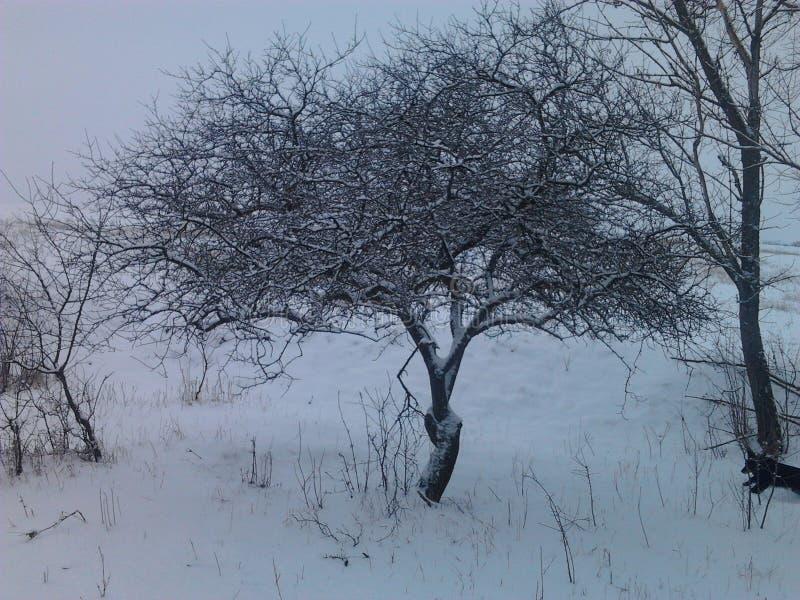 Albero bianco fotografie stock