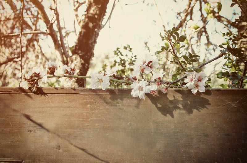 albero bianco dei fiori di ciliegia della molla e vecchio segno di legno immagine stock libera da diritti