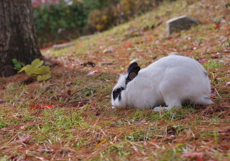 Albero bianco del giardino dell'isola di Namisum del coniglio fotografia stock libera da diritti