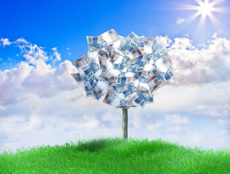Albero brasiliano dei soldi fotografia stock