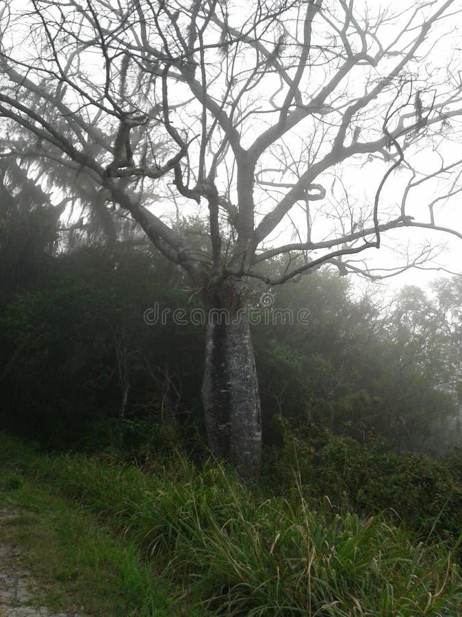 Albero brasiliano freddo immagini stock libere da diritti