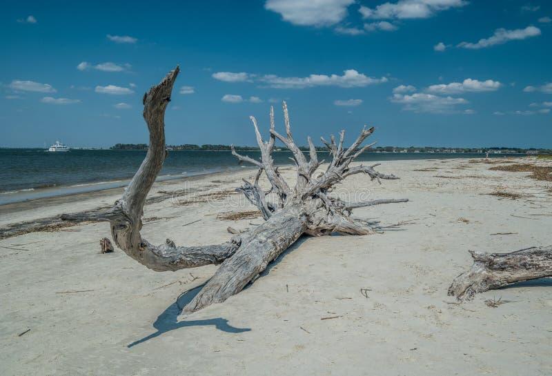 Albero caduto che si decompone sulla spiaggia immagini stock libere da diritti
