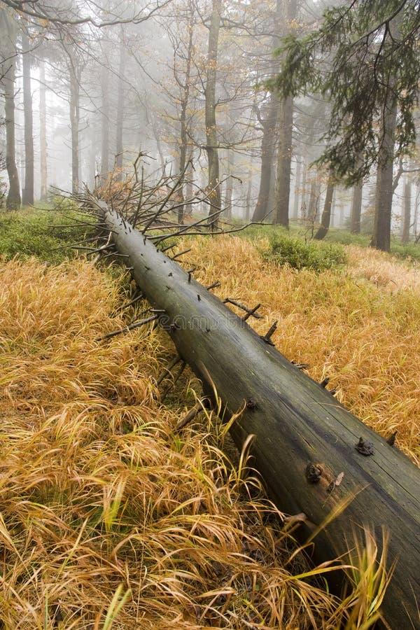 Albero caduto nella foresta fotografia stock