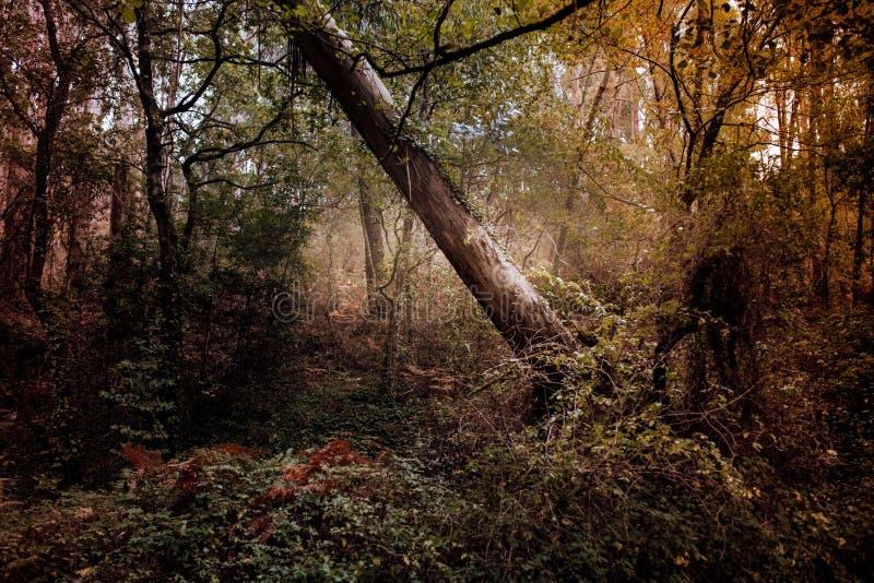 Albero caduto nella foresta in autunno immagini stock libere da diritti