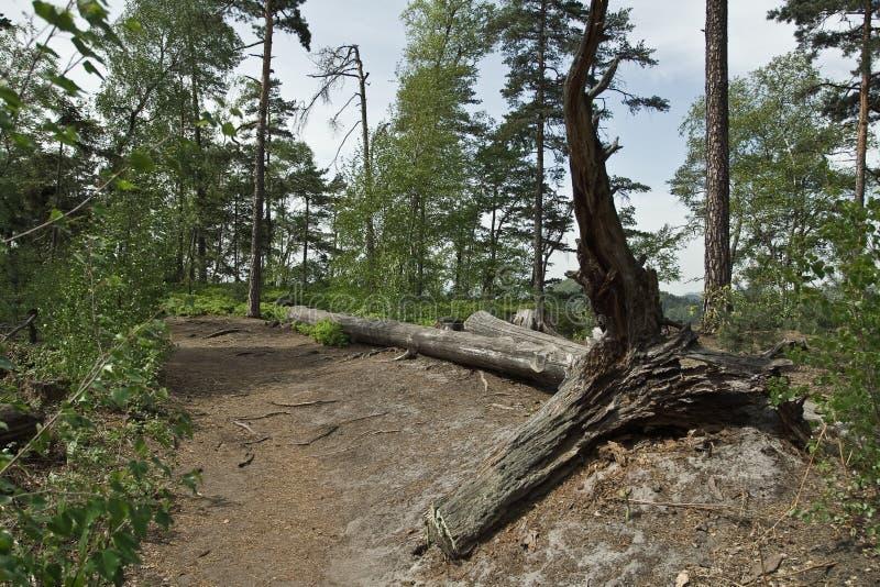 Albero caduto sul percorso della montagna fotografie stock
