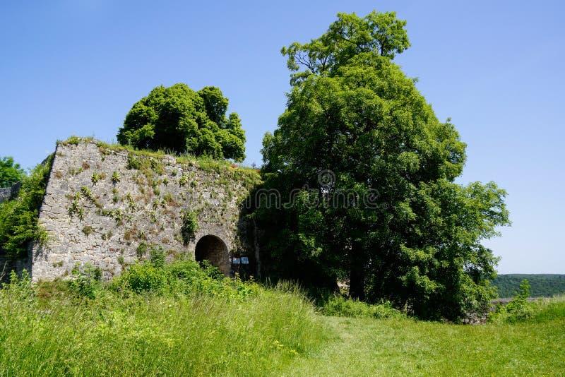 Albero che cresce davanti all'entrata del castello sul prato fotografia stock