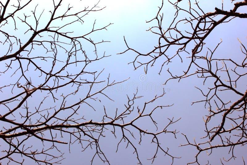Albero che fende il cielo immagini stock libere da diritti