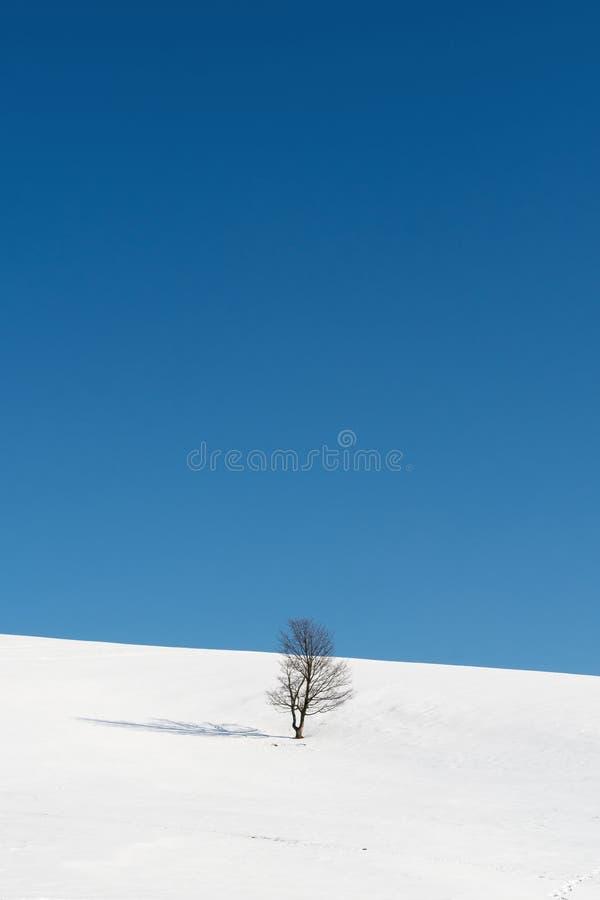 Albero che sta in mezzo delle pianure nevose fotografia stock