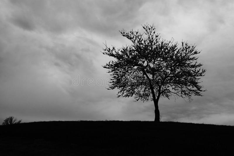 Albero che sta tempesta nuvolosa fotografia stock libera da diritti