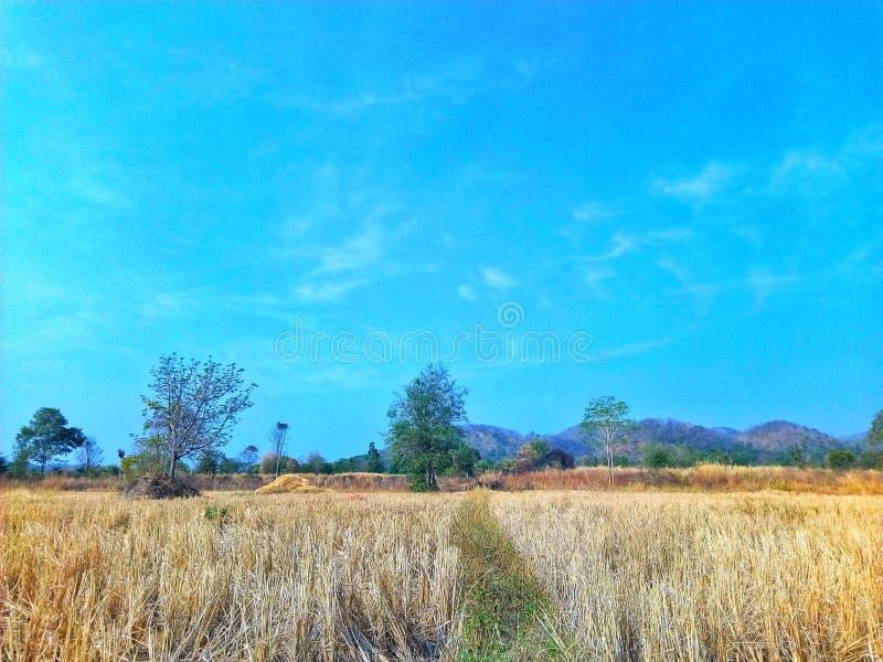 Albero, cielo, Campo, Landcape, Farmland immagini stock libere da diritti