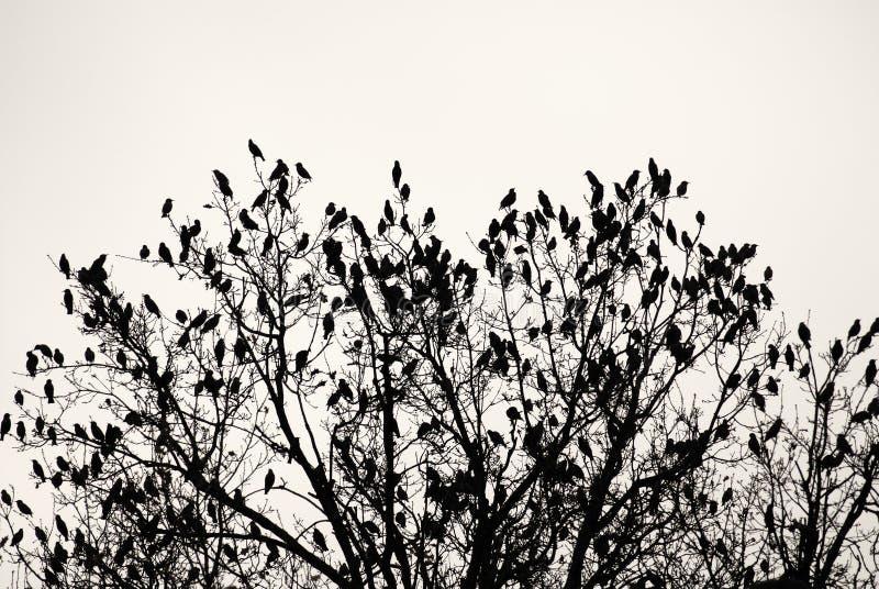 Albero con gli uccelli fotografie stock