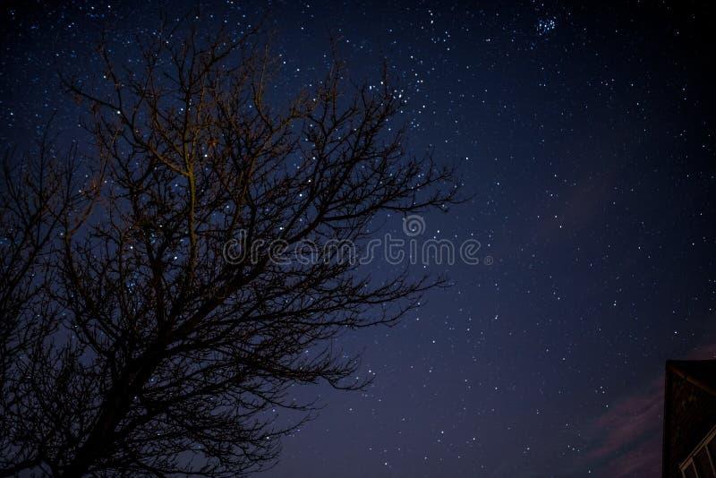 Albero con il fondo di notte stellata fotografia stock