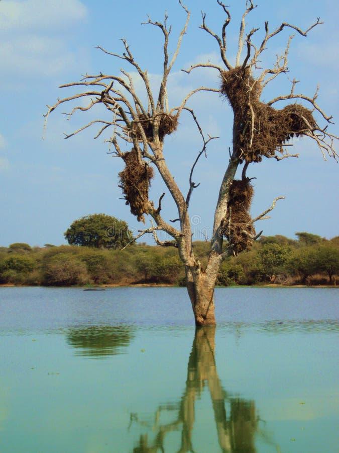 Albero con il nido fotografie stock