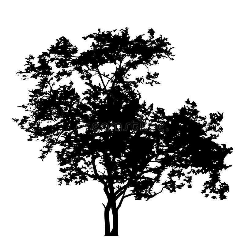 Albero con l'isolato della siluetta delle foglie sul vettore bianco del fondo illustrazione di stock