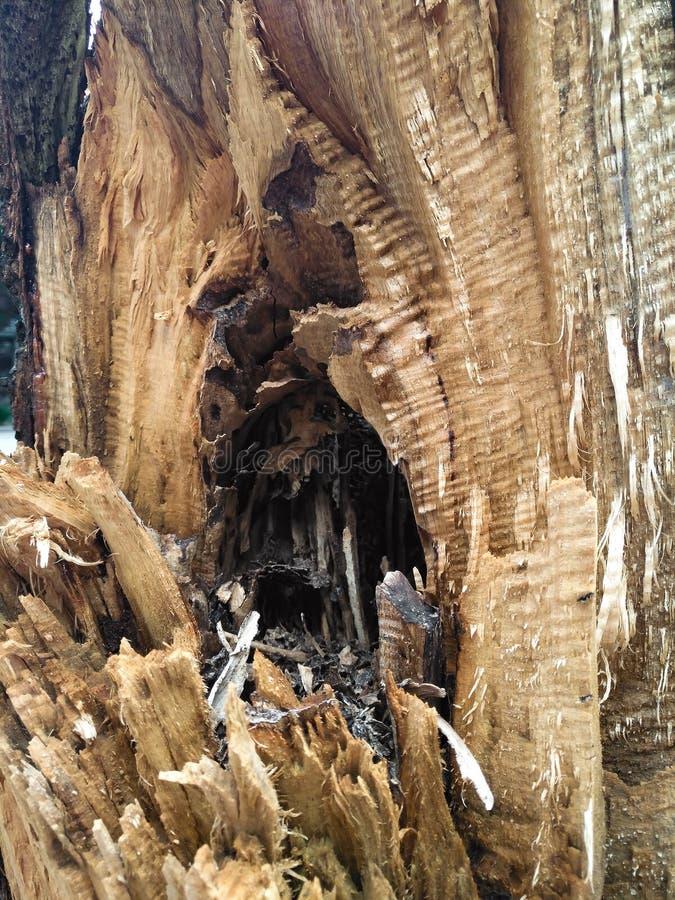 Albero con la corteccia nociva immagine stock