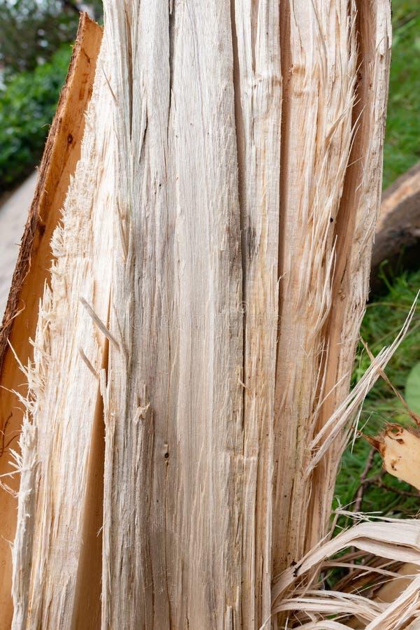 Albero con la fine nociva della corteccia sul verticale immagine stock libera da diritti