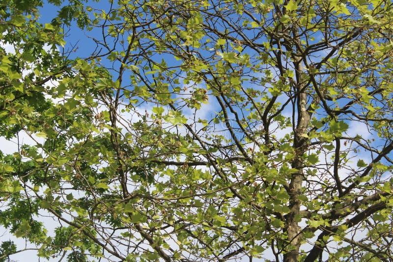 Albero con le foglie in una foresta immagine stock libera da diritti