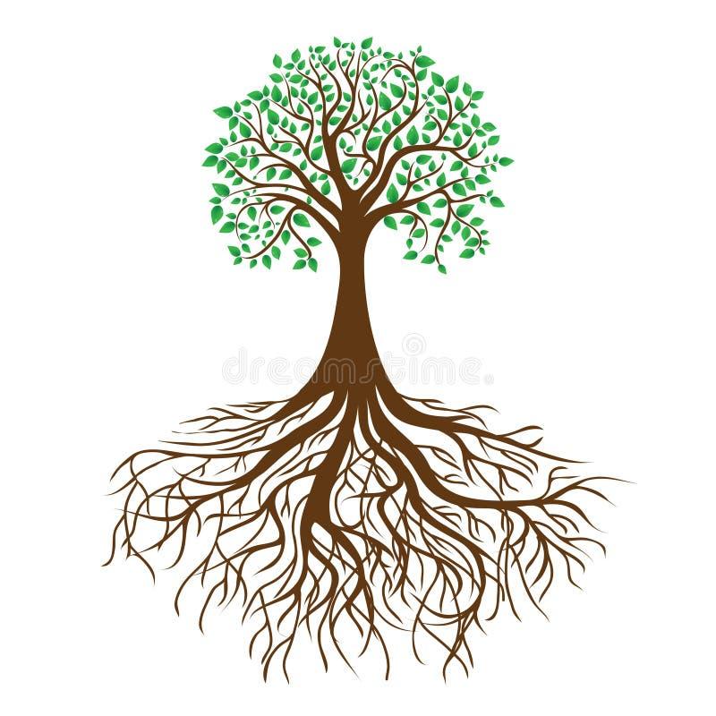 Albero con le radici ed il fogliame denso, vettore illustrazione di stock