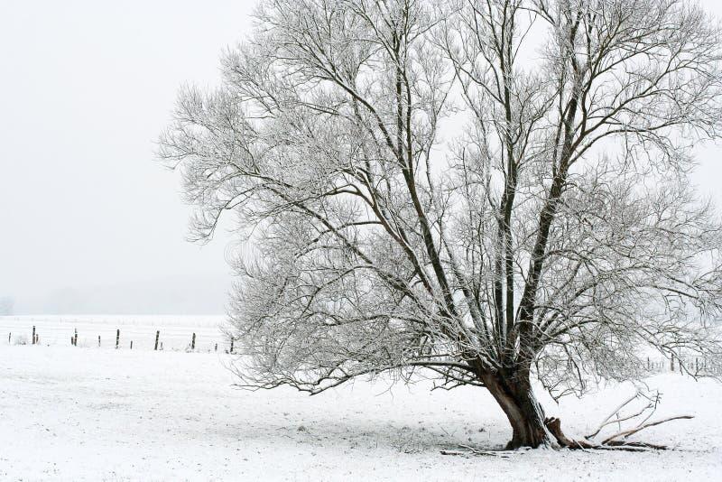 Albero con neve fotografia stock libera da diritti