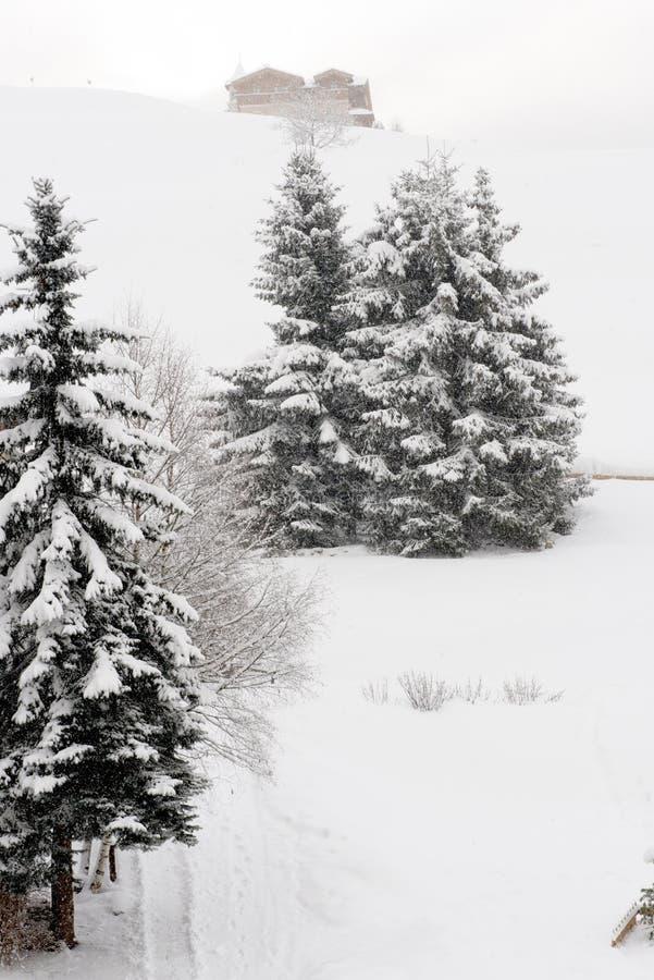 Albero con neve immagine stock