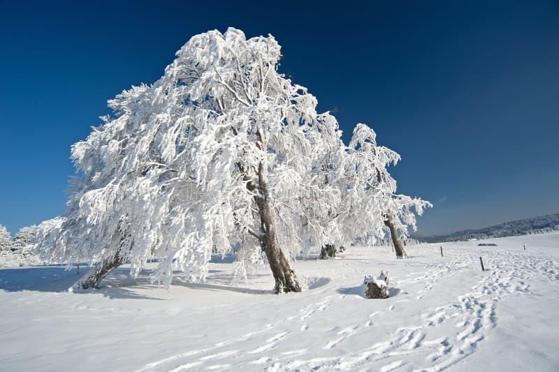 Albero congelato fotografie stock libere da diritti