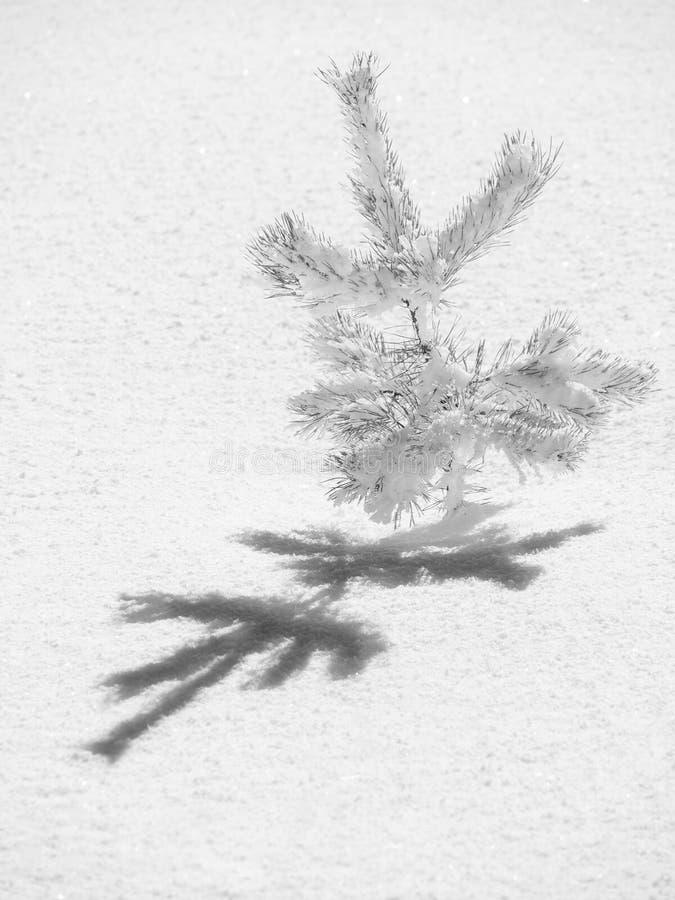 Albero congelato immagini stock