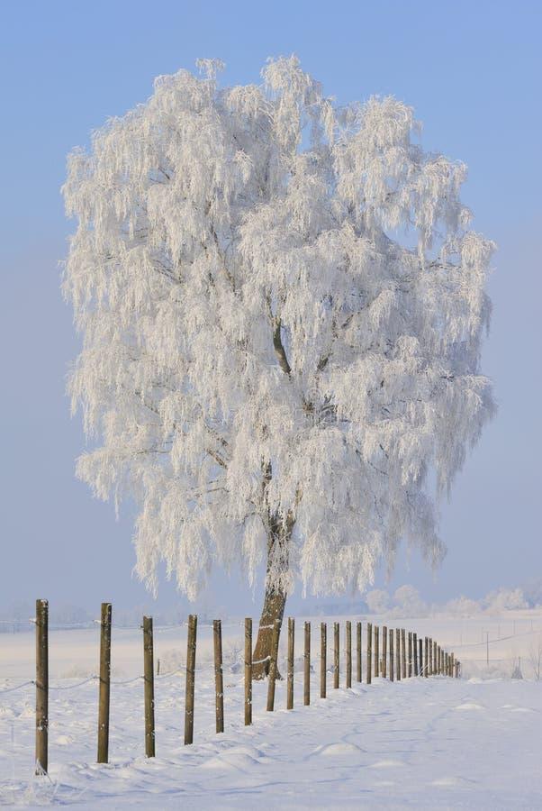 Albero congelato in inverno fotografie stock