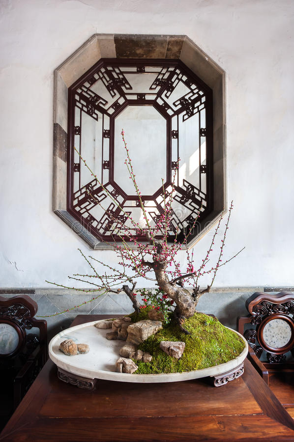 Albero conservato in vaso a Lion Grove Garden, Suzhou, Cina dei bonsai fotografia stock libera da diritti