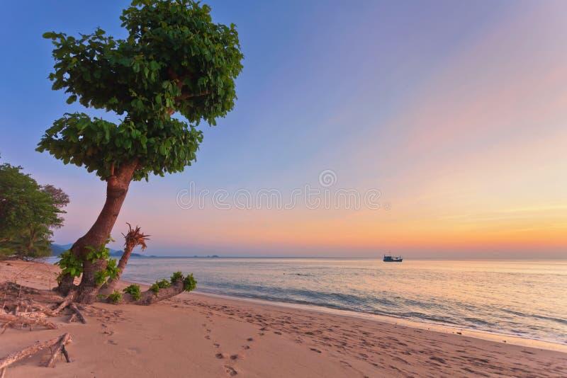 Albero contro il tramonto immagini stock libere da diritti