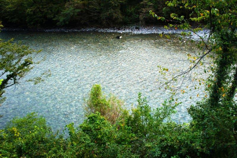 Albero contro lo sfondo di piccolo fiume blu immagini stock