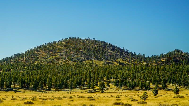 Albero coperto di montagna a Flagstaff fotografia stock libera da diritti