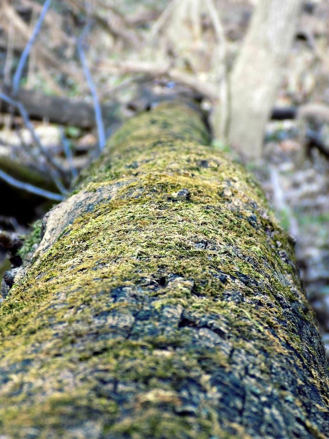 Albero crollato coperto in muschio fotografia stock