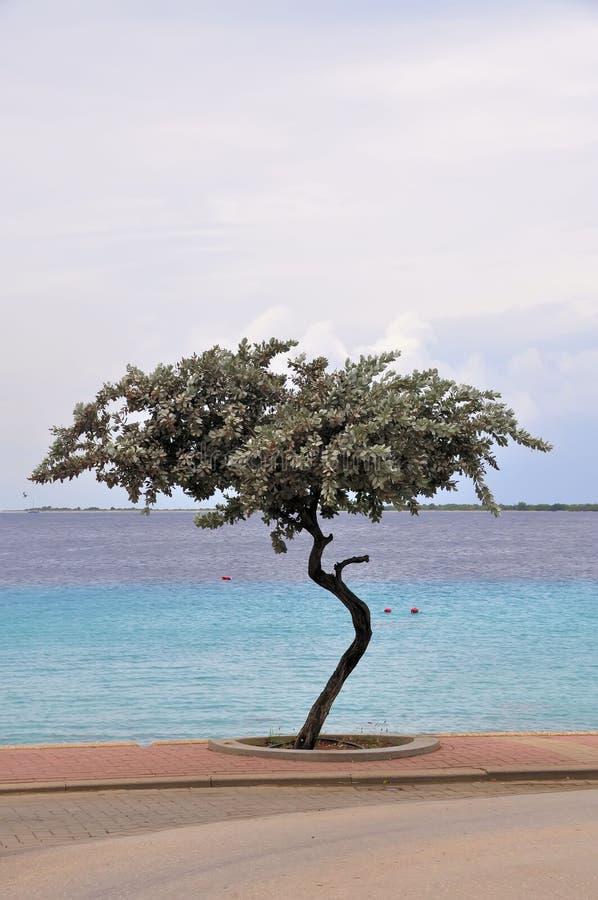 Albero curvato ed acqua tropicale immagine stock libera da diritti