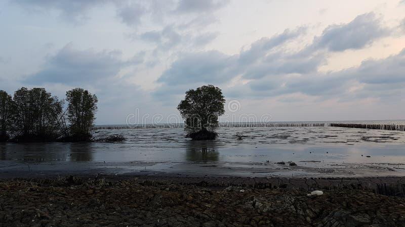 albero da solo nel mare immagine stock