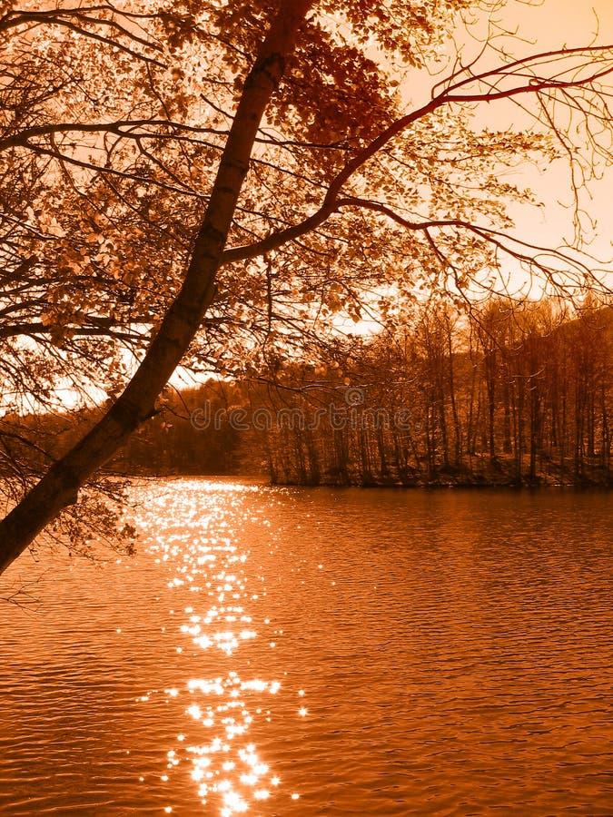 Albero dal lago fotografia stock
