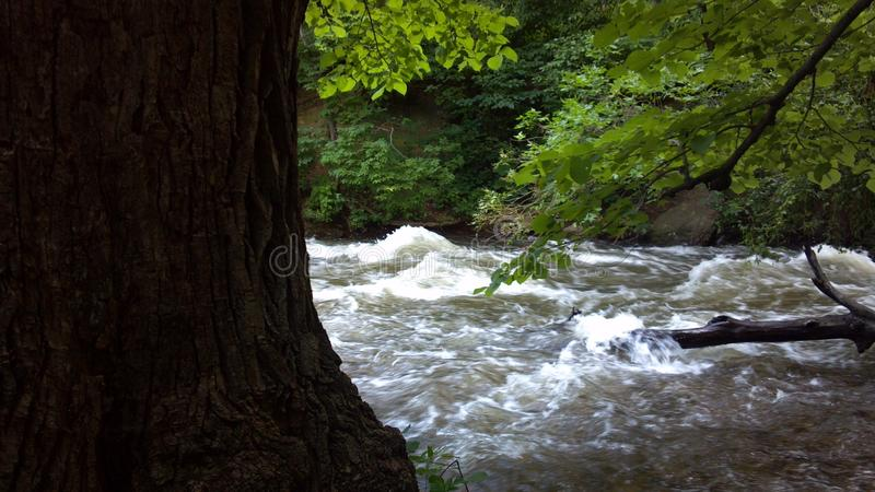 Albero davanti al fiume fotografie stock